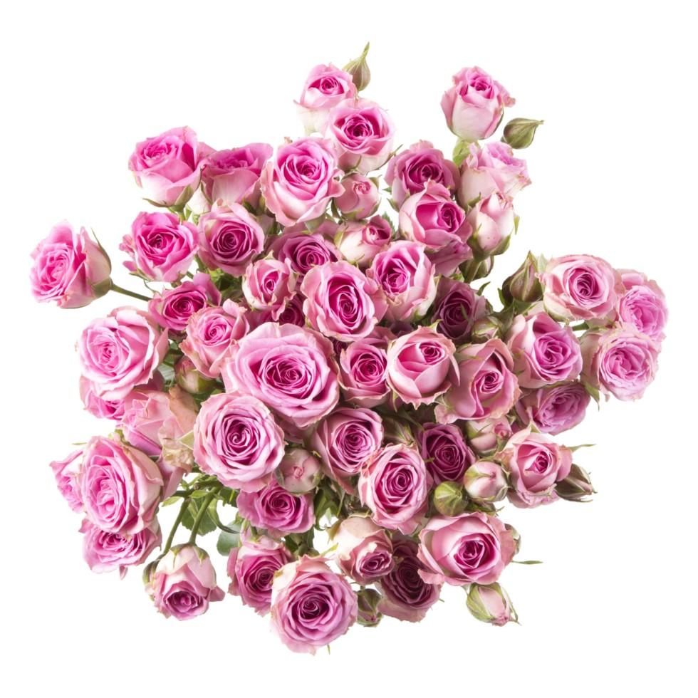 Букет Роза кустовая высота 40 см 9 шт.