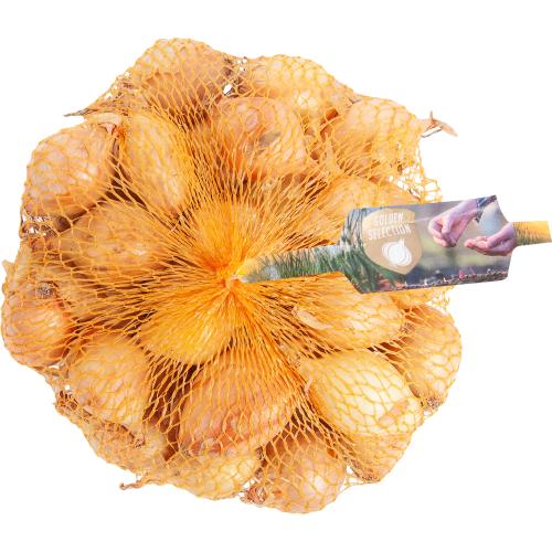 Лук-севок «Стурон» упаковка 0.45 кг