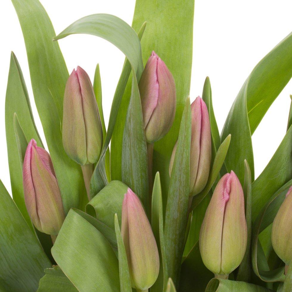 Букет «Тюльпаны», 9 шт.