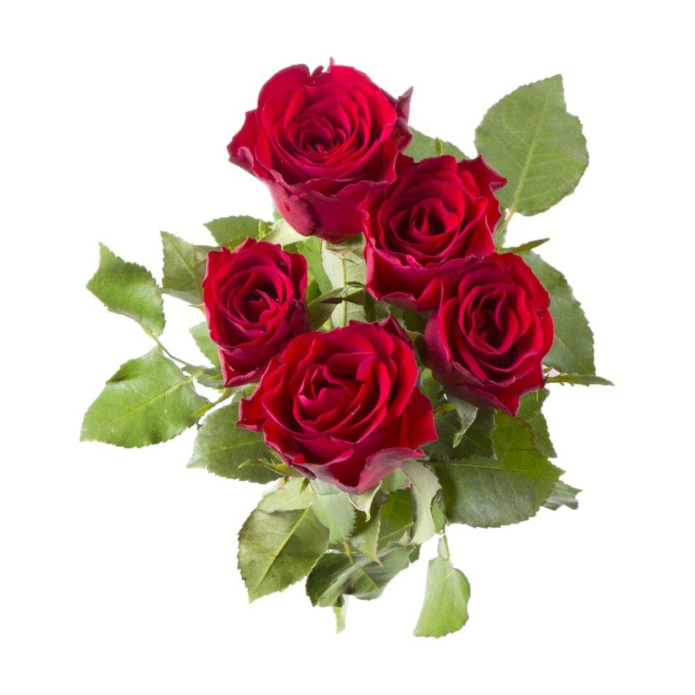 Букет Роза 40 см, 5 шт.