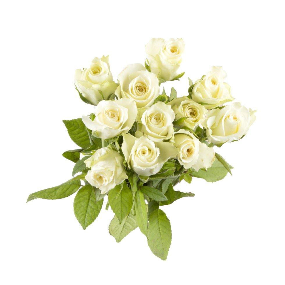 Букет Роза 40 см, 11 шт.