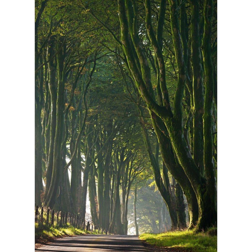 Фотообои бумажные «Королевская дорога» 184х254 см