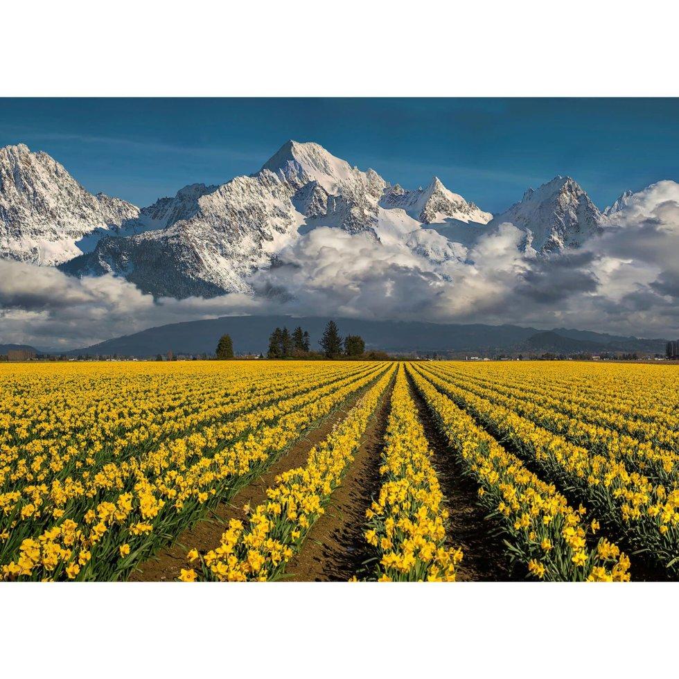 Фотообои бумажные «Небо и нарциссы» 254х184 см