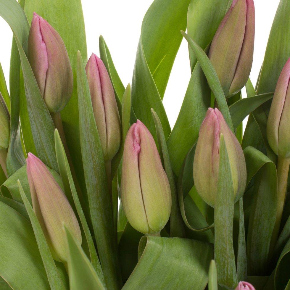 Букет «Тюльпаны», 7 шт.