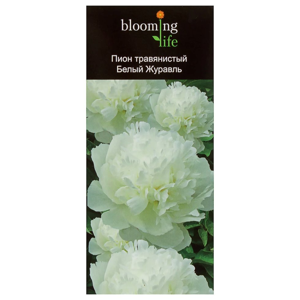 Пион травянистый «Белый Журавль» (в тубе)