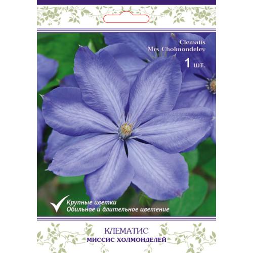 Клематис крупноцветковый Миссис Холмонделей h15 см